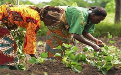 11 Kenyan Agri-Businesses tackling food security set to receive USD 100,000 investment
