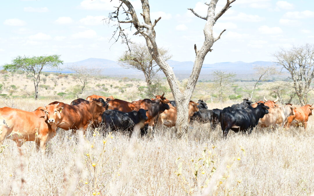 CABE works to enhance Climate-Smart Pastoral Innovations in Kenya